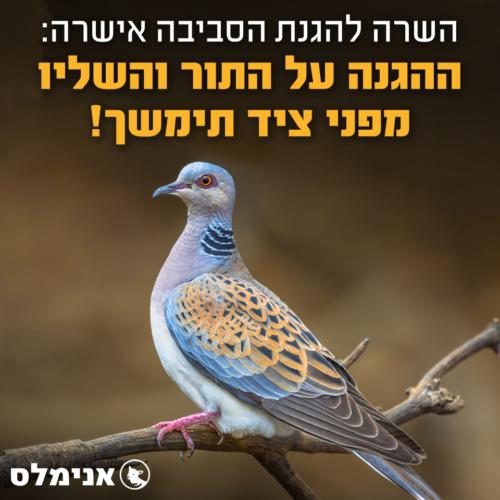השרה להגנת הסביבה אישרה - ההגנה על התור והשליו מפני ציד תימשך!