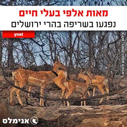 מאות אלפי בעלי חיים נפגעו בשריפה בהרי ירושלים