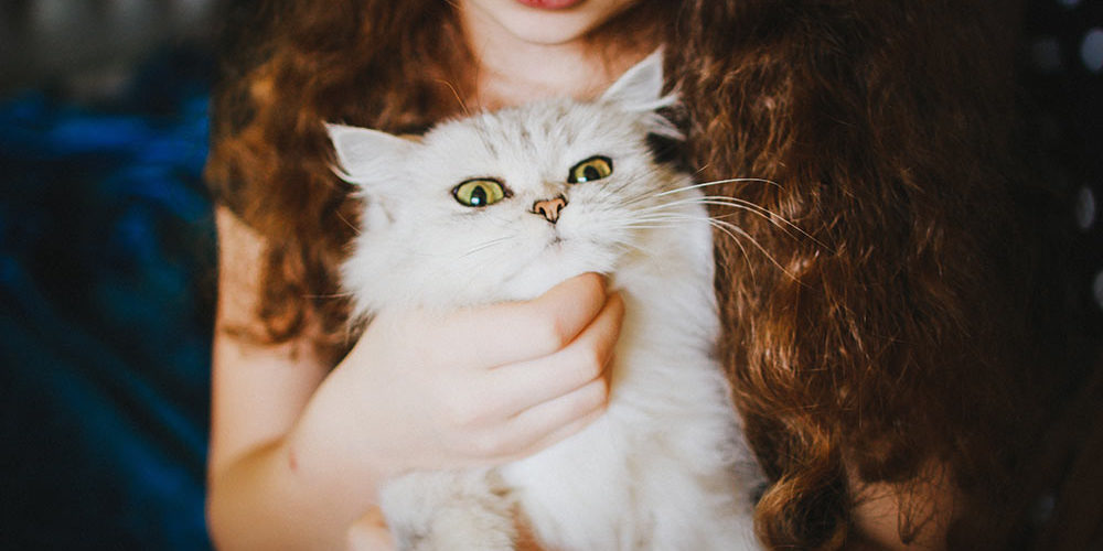 חתול-מתוק