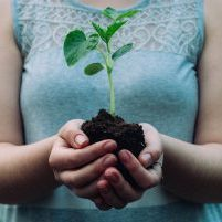 holding-plant