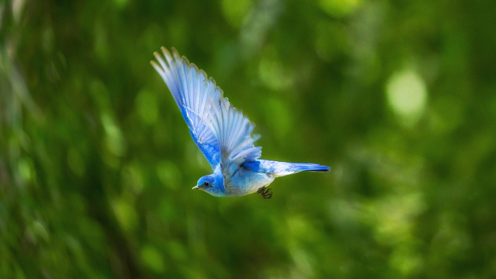 לא רק צמחוני, אלא גם פעיל מוקדם לשחרור ציפורים מכלובים