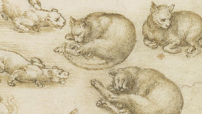 רישומי חתולים מאת לאונרדו דה וינצ'י