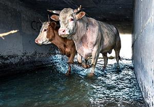 הקשר בין הרס הסביבה לתעשיית הבשר