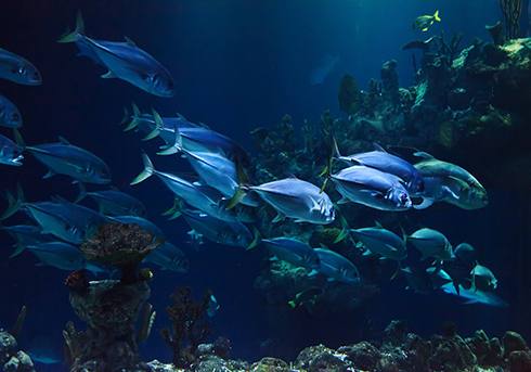 מאבק הדגים